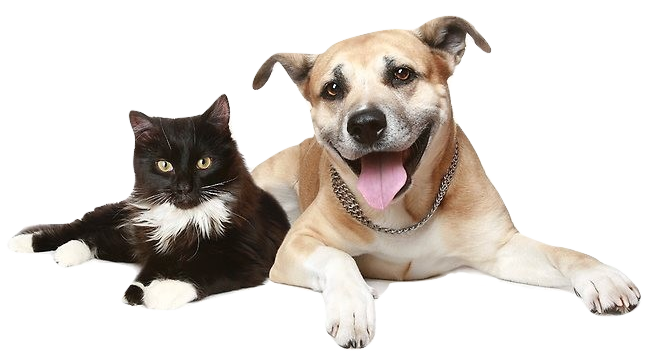 Pet Rescue and Care